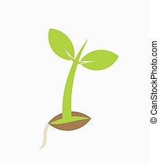 plante, jeune, plant