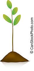 plante, jeune, terrestre