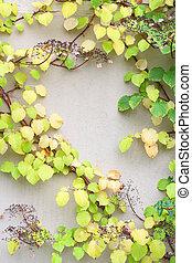 plante, liane, feuilles, vigne, jaune, automne, vert
