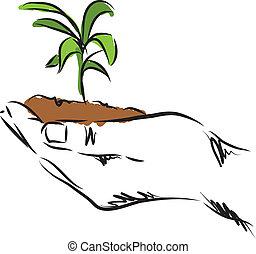 plante, main, illustration, pendre