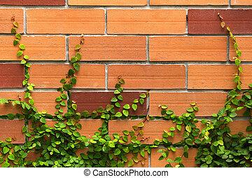 plante, mur, liane, arrière-plan vert, brique