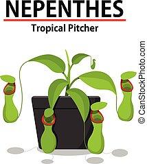 plante, nepenthes, pot, isolé, blanc vert