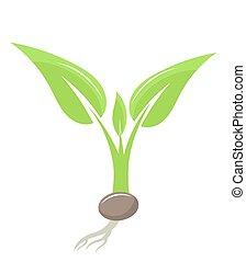 plante, plant