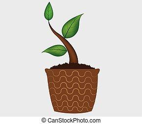 plante, -, pot, arrière-plans, jeune, isolé, vecteur, blanc