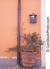 plante, rue, rome