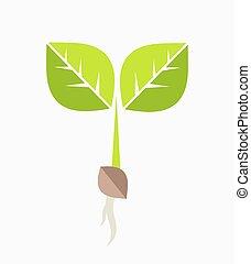 plante, seedling.