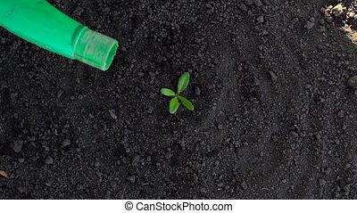 plante, sommet, arrosage, jardin, paysan, petit, vue