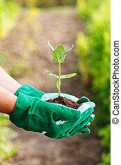 plante, tenant main