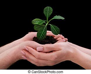 plante, tenant mains