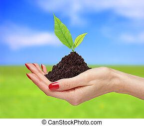 plante, tenue, nature, sur, femme, clair, arrière-plan vert, mains