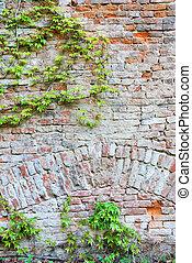 plante, vieux, mur, liane, vert, brique, lierre