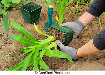 planter, 01, daylily