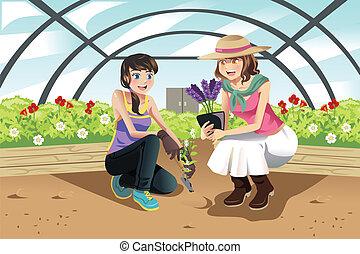 planter, serre