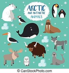 plat, style, ensemble, arctique, character., illustration, animals., vecteur, antarctique