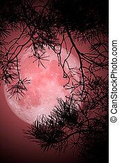 pleine lune, nuit