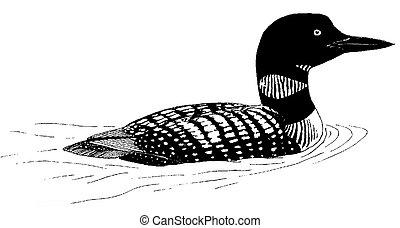 plongeon, commun