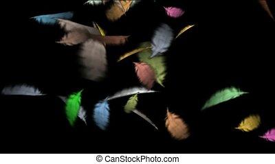 plume, couleur, flotter
