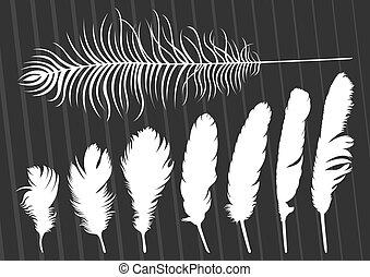 plumes, illustration, vecteur, collection, fond, oiseau