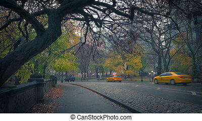 pluvieux, central, matin, ny, parc