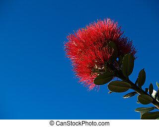 pohutukawa, flower., rouges