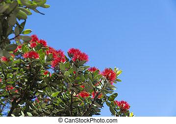 pohutukawa, maunganui, fleur, brillant, rouges, monter, base