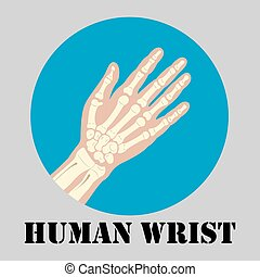 poignet, emblème, humain