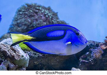 poisson bleu, saveur forte
