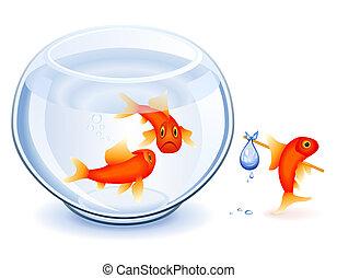 poisson rouge, émancipation