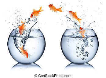 poisson rouge, -, isolé, concept, changement