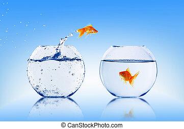 poisson rouge, saut