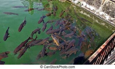 poissons, alcazar, piscine