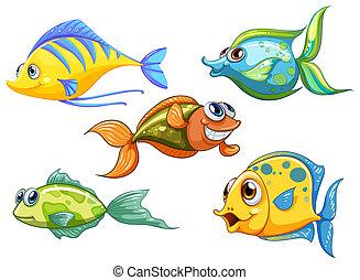 poissons, cinq, coloré