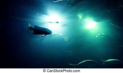 poissons, différent, aquarium
