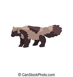 polaire, animal, arctique, chien, illustration, vecteur, fond, raton laveur, blanc