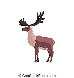 polaire, animal, arctique, illustration, renne, vecteur, fond, blanc