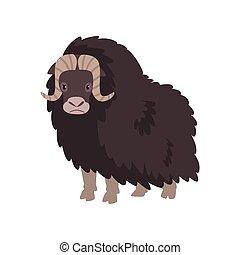 polaire, animal, arctique, illustration, vecteur, fond, bison, blanc