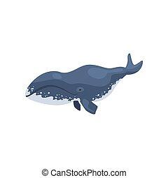 polaire, animal, arctique, tueur, illustration, vecteur, fond, baleine, blanc