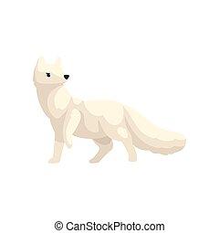 polaire, animal, renard arctique, illustration, vecteur, fond, blanc