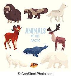 polaire, chien, animaux, renard, montagne, ensemble, arctique, tueur, chèvre, ours, bison, vecteur, illustration, fond, baleine, raton laveur, loup, blanc, lemming