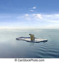 polaire, dernier, ours