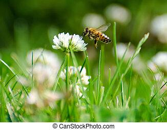 pollen, regarder, fleur, abeille