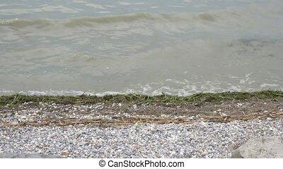 pollution, lac, algues