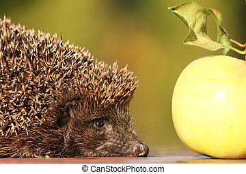 pomme, jardin, hérisson