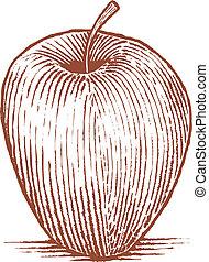 pomme, woodcut