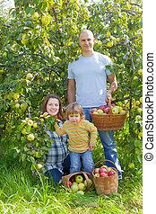 pommes, famille, jardin, heureux