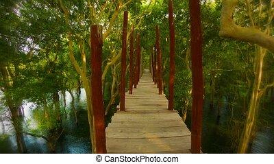 pont, bois, bush., sur, cambodge, eau, aller