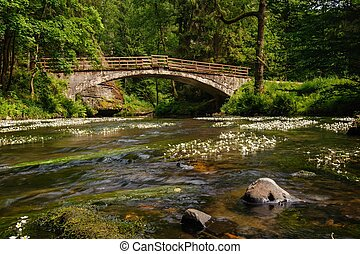 pont, rivière, vieux, travers
