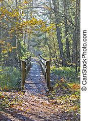 pont, vieux, forêt