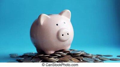 porcin, cochon, pièces, homme, banque, tas, forme, mettre, pièces, main, closeup.