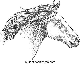 portrait, cheval, blanc, croquis, crayon
